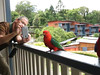 Paul and King-Parrot-2960609352-O