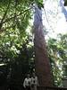 Kauri tree-2960537649-O