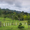 EL OCASO COFFEE PLANTATION