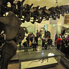 DINOSAURS  -     American  Museum  of  Natural  History,   Central  Park  West  NYC