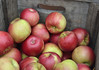Crated Apples in a Wooden Crate