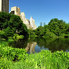 CENTRAL  PARK  IN  SUMMER   -   Manhattan  NYC