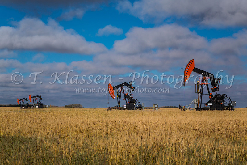Oil production pumpers in a ripe grain field in the Bakken oil field near Stoughton, Saskatchewan, Canada.