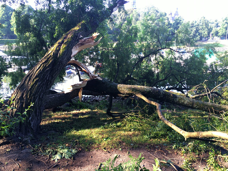 Damage  in the Ciy Park from  the high winds in yesterday's thunderstorm