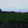Crops Under The Moon