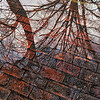 Tree reflections, brick walk