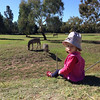 Scarlett watching the Zebras - Western Plains Zoo Dubbo, Easter 2014