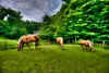 "Horses grazing in field.......................................to purchase - <a href=""http://bit.ly/1tf7cII"">http://bit.ly/1tf7cII</a>"