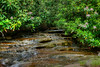"""Small stream in West Virginia with Mountain Laurel........................................to purchase - <a href=""""http://bit.ly/1zTQfp4"""">http://bit.ly/1zTQfp4</a>"""