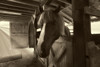 "Horse in barn stall......................................to purchase - <a href=""http://bit.ly/X6XUBj"">http://bit.ly/X6XUBj</a>"