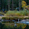 Early morning reflections at the beaver pond in Lundy Canyon in California's Eastern Sierras on October 5, 2013.