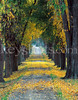 8 5x11 Tree Lined Roadway
