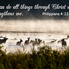 I can do all things Philippians 4 13 KJV on elk in the mist