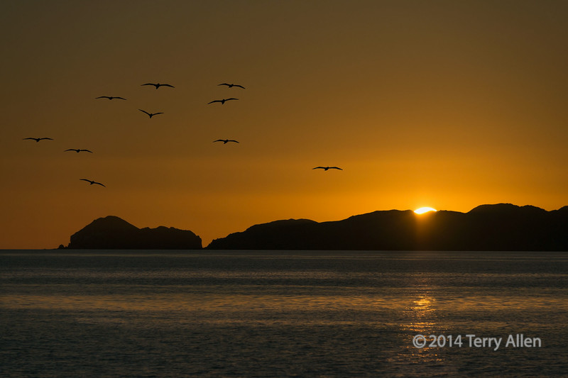 "Sunrise with sea birds<br /> <br /> Probably pelicans, as there was a colony nearby, Isla Carmen, Sea of Cortez, Baja Mexico<br /> <br /> Other photos from the Sea of Cortez can be seen here: <a href=""http://goo.gl/PNKxL7"">http://goo.gl/PNKxL7</a><br /> <br /> 22/07/14  <a href=""http://www.allenfotowild.com"">http://www.allenfotowild.com</a>"