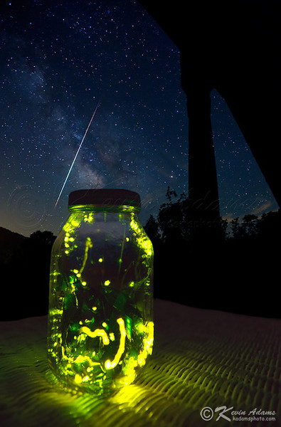 Photo of Fireflies in Jar-Lightning Bug Pictures