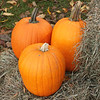 Bright Colored Pumpkins
