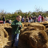 Hay maze at Spicers