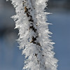 Hoarfrost on Thistle
