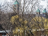 The copper topped towers of St. Thomas the Apostle Catholic Church are visible behind a screen of yellow-green willow branches.  Seen from the pedestrian bridge at Island Park between the island and the south (right) bank of the Huron River. Ann Arbor, Michigan April 18, 2013