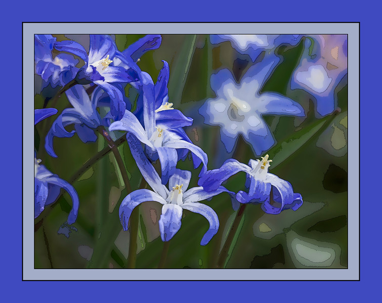D105-2013 Silly Scilla With a layer of cutout (followed by poster edges). . Ann Arbor, Michigan April 15, 2013