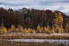 D314-2013  Tamaracks in autumn  Mill Lake, Waterloo Recreation Area, Washtenaw County, Michigan November 10, 2013
