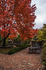Red maple in the courtyard<br /> <br /> Michigan League<br /> University of Michigan, Ann Arbor<br /> November 2, 2013