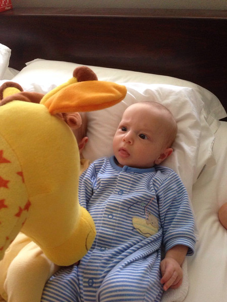Good Morning Jerry the Giraffe! - 4 Months Old