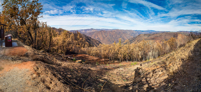 Rim Fire Devastation