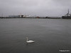 Marchwood Swan PDM 21-12-2013 15-13-55
