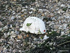 Costco Safety Helmet washed up Marchwood PDM 25-06-2014 21-14-29