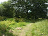 Along Bury Marsh Eling River Test Southampton PDM 17-07-2014 15-31-02