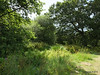 Along Bury Marsh Eling River Test Southampton PDM 17-07-2014 15-31-14