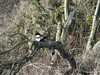 Magpie Foreshore Hamble-le-Rice PDM 10-12-2014 12-54-07