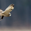 Short Eared Owl with Payload II