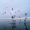"Feeding Seagulls over the Eastern Bay.  Video can be seen: <a href=""http://youtu.be/aXsqZT2UEsg"">http://youtu.be/aXsqZT2UEsg</a>"