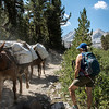 mountain-trail-horses-4