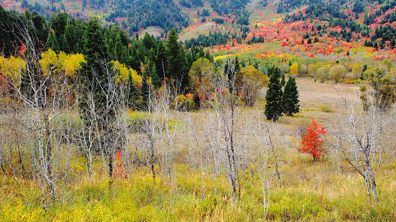 Fall Colors Hit Utah Mountains