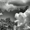 Trees and clouds, Minuteman National Historical Park, mono