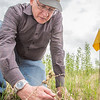 Steven Sparrow, dean of UAF's College of Natural Resources and Agricultural Sciences, collects data on a plot of willows being grown on the experiment farm to study their potential use as a source of biofuel.