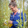 Desneige Hallbert collects data on a group of willows in a plot under cultivation on UAF's experiment farm. Working as an Intern with the Alaska Center for Energy and Power, she's helping to monitor the growth of native plant species for their potential use as biomass fuels.