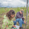 Amanda Byrd, a research technician with the Alaska Center for Energy and Power, works with Steven Sparrow, dean of UAF's College of Natural Resources and Agricultural Sciences, to collect data on a plot of willows being grown on the experiment farm to study their potential use as a source of biofuel. A group ACEP summer interns look on.