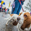 Sally Mac, the basset hound, was among the participants in the UAF contingent of the 2012 Golden Days parade.