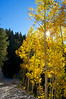 Late afternoon sun beams through golden aspens along Mount Antero's lower trail; Colorado Sawatch Range.