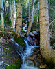 A mountain spring on lower Mount Antero; Colorado Sawatch Range.