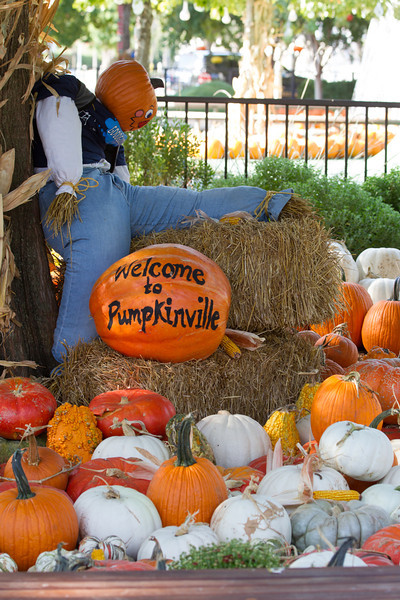 Pumpkin Villiage is open at the Myriad Gardens until October 31st.