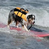 2012 Surf City Surf Dog - Makes it look easy