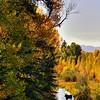 Moose in creek on aptly named Moose Road