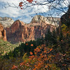 Zion Fall Colors