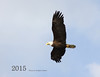 Cover_IMG_1056_Bald_Eagle_1_resize