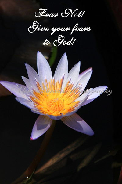 FEAR NOT, WATERLILY